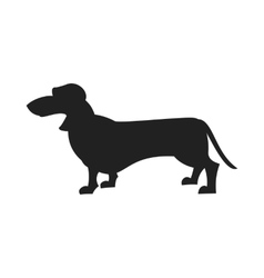 Dachshund Black Silhouette vector image