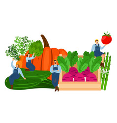 Farmers and vegetables harvest time vector
