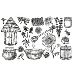 Honey set with plants and flowers collection of vector