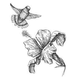 Humming bird and flower sketch vector