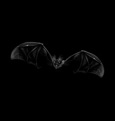 portrait of a bat in flight on a black background vector image