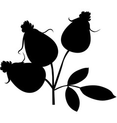 rose hip silhoulette - black vector image