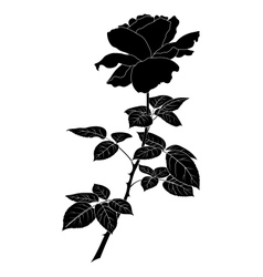 Flower rose silhouette vector