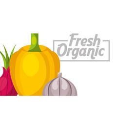 vegetables fresh food vector image