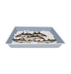Fish tray vector