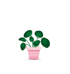 green plant in flower pot vector image