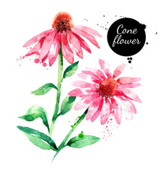 hand drawn watercolor purple coneflower painted vector image