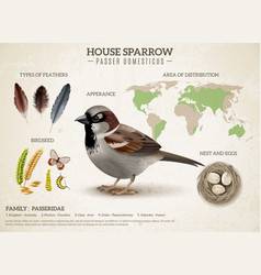 sparrow population infographic composition vector image