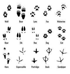 Wildlife animals reptiles and birds footprint vector