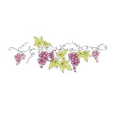 design elements - vine vector image