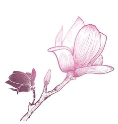 Vintage magnolia flower vector