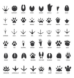 animals footprints animal paws prints elephant vector image
