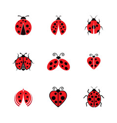 beauty bug icon vector image