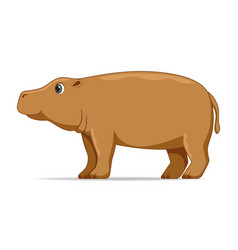 Hippopotamus animal standing on a white background vector