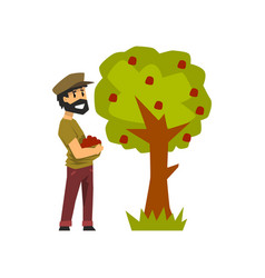 male farmer picking red apples from tree gardener vector image