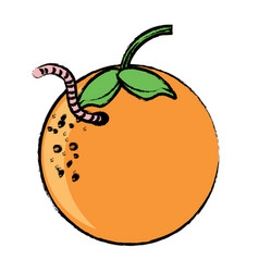 Orange fruit icon image vector