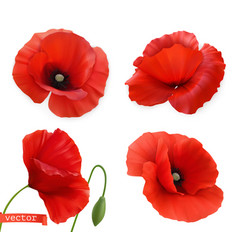 Red poppies papaver flowers 3d realistic icon set vector