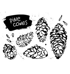 Set of pine or spruce cones vector