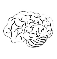 sketch brain human development idea vector image