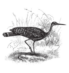 Sunbittern in swamp vintage vector
