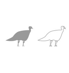 turkeycock grey set icon vector image