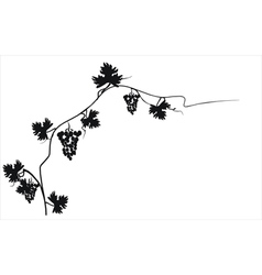 Black silhouette of grapes on the vine vector image