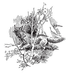 Fox hunting vintage vector