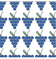 Fresh grape fruit and organ food background vector