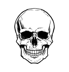 Black and white human skull with jaw vector