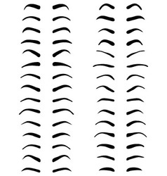 Types of eyebrows vector image vector image