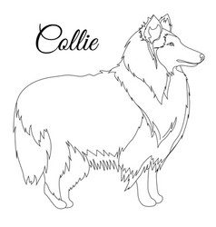 Collie dog outline vector