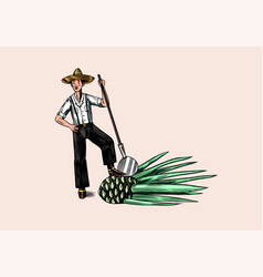 Farmer with blue agave plant mexican man tequila vector