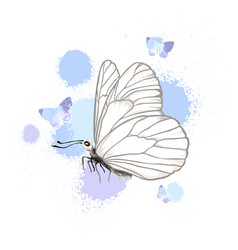 Realistic butterfly isolated on white background vector