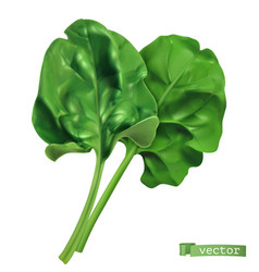 Spinach vegetable greens 3d realistic food object vector