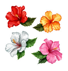 realistic hibiscus flower leaves set vector image vector image