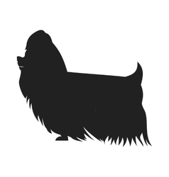 Yorkshire Terrier Black SSilhouette vector image