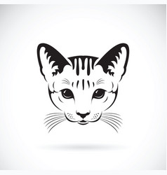 Cat face on white background pet animals vector
