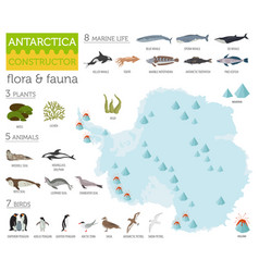 Antarctic antarctica flora and fauna map flat vector