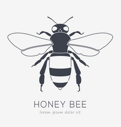 Bee logo business icon for your company vector