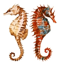 Watercolor seahorses vector