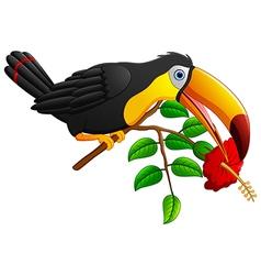 Funny toucan bird cartoon vector image vector image