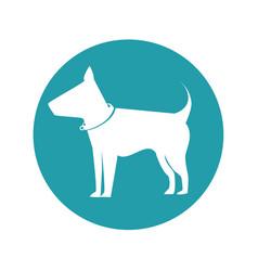 pet animal design vector image vector image
