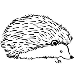 hedgehog stylization icon logo line sketch vector image