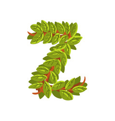 letter z english alphabet made of tree branches vector image