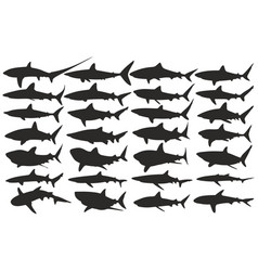 Silhouettes of sharks vector