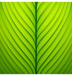 Texture of a green leaf vector