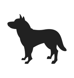 Husky Dog Black Silhouette vector image