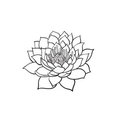 sketch lotus flower blossom blooming vector image