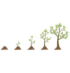 tree life cycle vector image