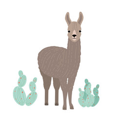 adorable llama or cria isolated on white vector image